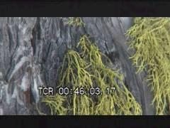 Thumbnail of Lotsa Lichen
