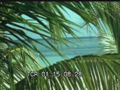 Thumbnail of In The Tropics