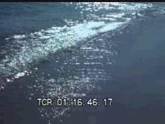 Thumbnail of At The Shoreline