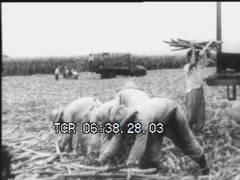 Thumbnail of Cuban Collective Farming