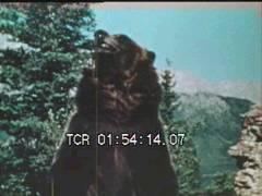 Thumbnail of Big Wild Animals