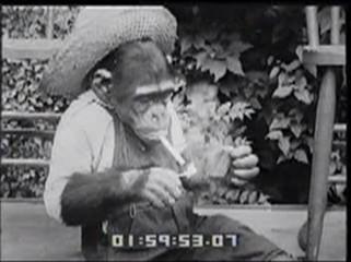 Thumbnail of Smoking Chimp Inhales