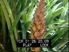 Thumbnail of Exotic Flowers Of Brazil